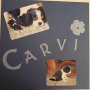 carvi 4 w