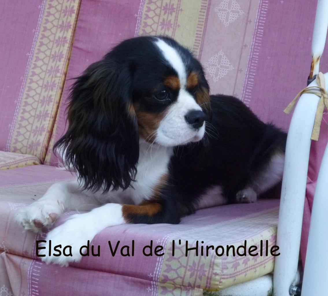 Elsa du Val de l'Hirondelle