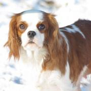 Betty joue la star au sport d'hiver