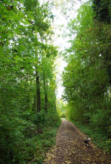 promenade en forêt, Chiper ouvre le chemin