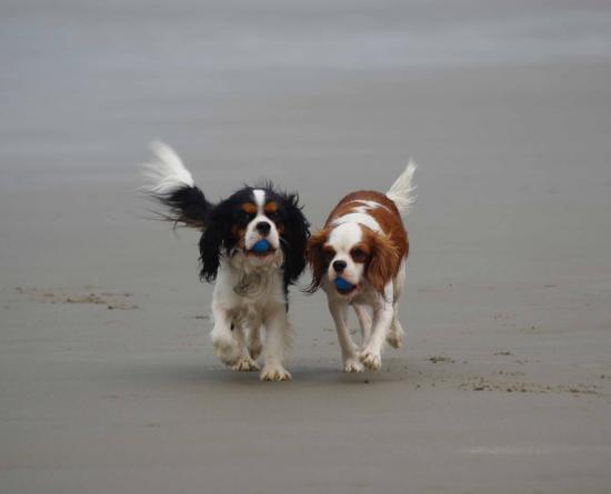 Jeux de balle sur la plage