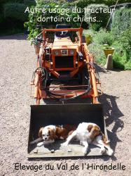 14 tracteur a chiens
