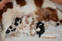 2016 naissance cinq chiots