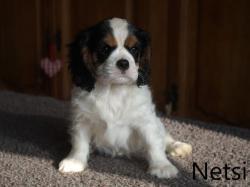 Netsie 1 w